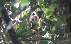 Extinct Animal Resurfaces in Indonesia