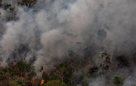 Amazon Rainforest Fire Ravages Wildlife