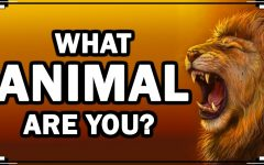 What Animal Are You?