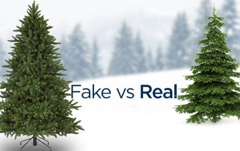 What's Better, Real or Fake Christmas Trees?